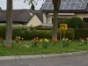 Frühlingsblumen in Wülscheid - Unterdorf